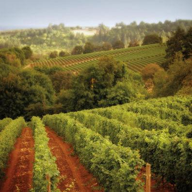 Willamette valley vineyard xjpy7c