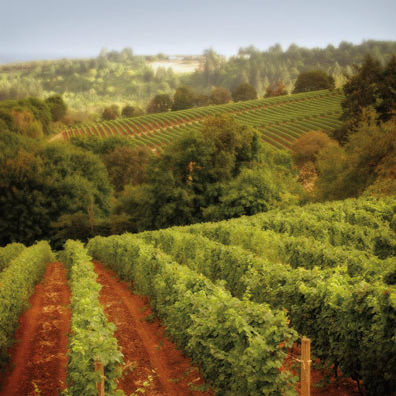 Willamette valley vineyard xjpy7c