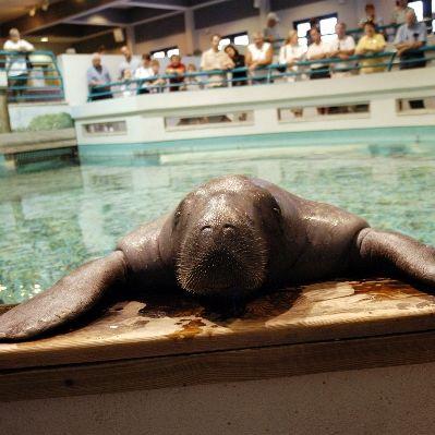 Snooty aquarium 2004 med us3cji