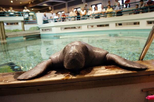 Snooty aquarium 2004 med cf8vjc
