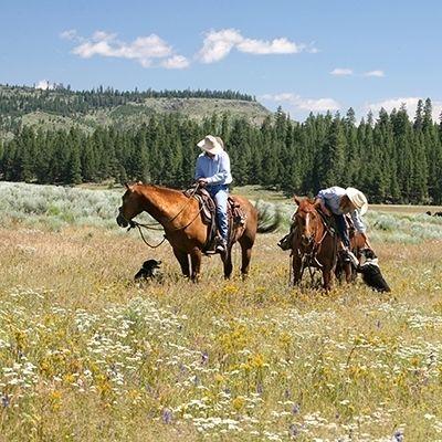 Arr horses 10 12 aoygfu