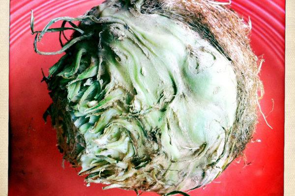 Celeriac mqbruf