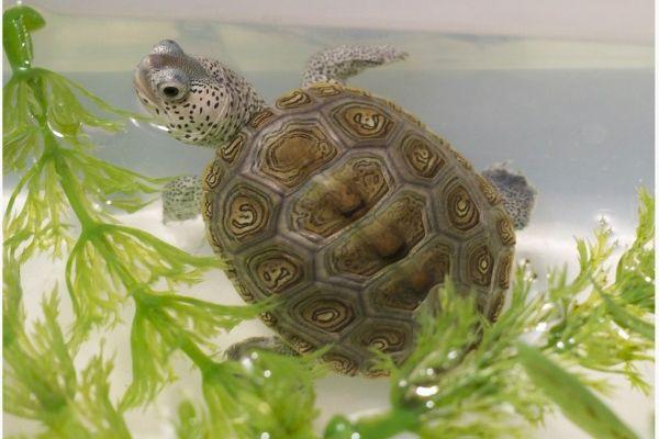 Baby turtle edit fw9xbv