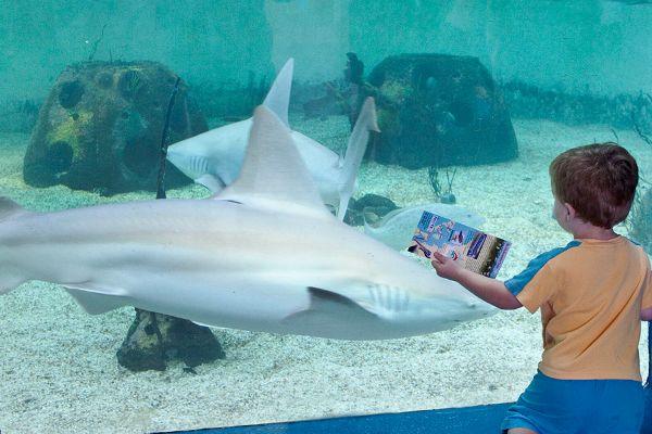 Large shark exhibit o7emqt