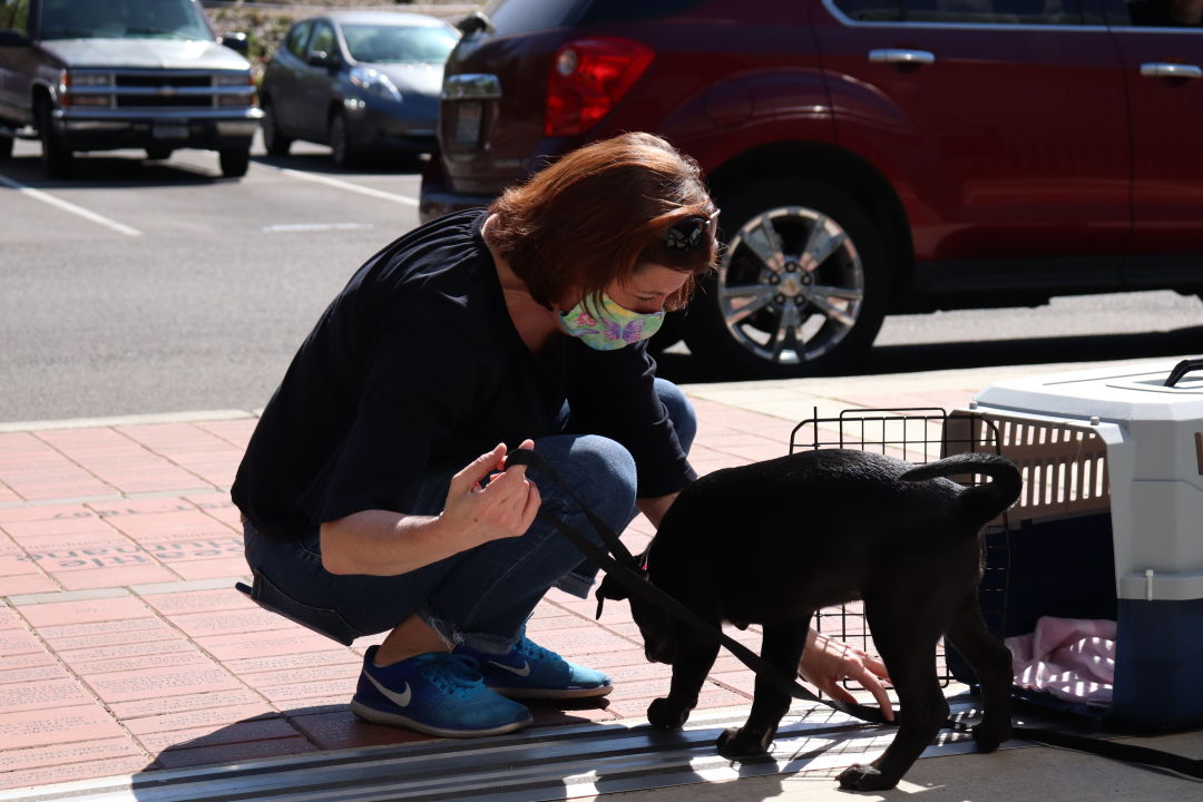 Adopter picks up puppy in cage from curbside adoption