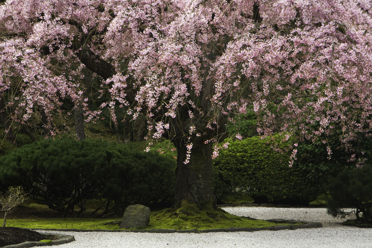 Portland Japanese Garden Reopens March 1 Portland Monthly