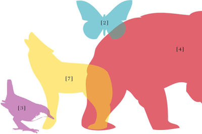 0714 fauna finder drawing b0dtop