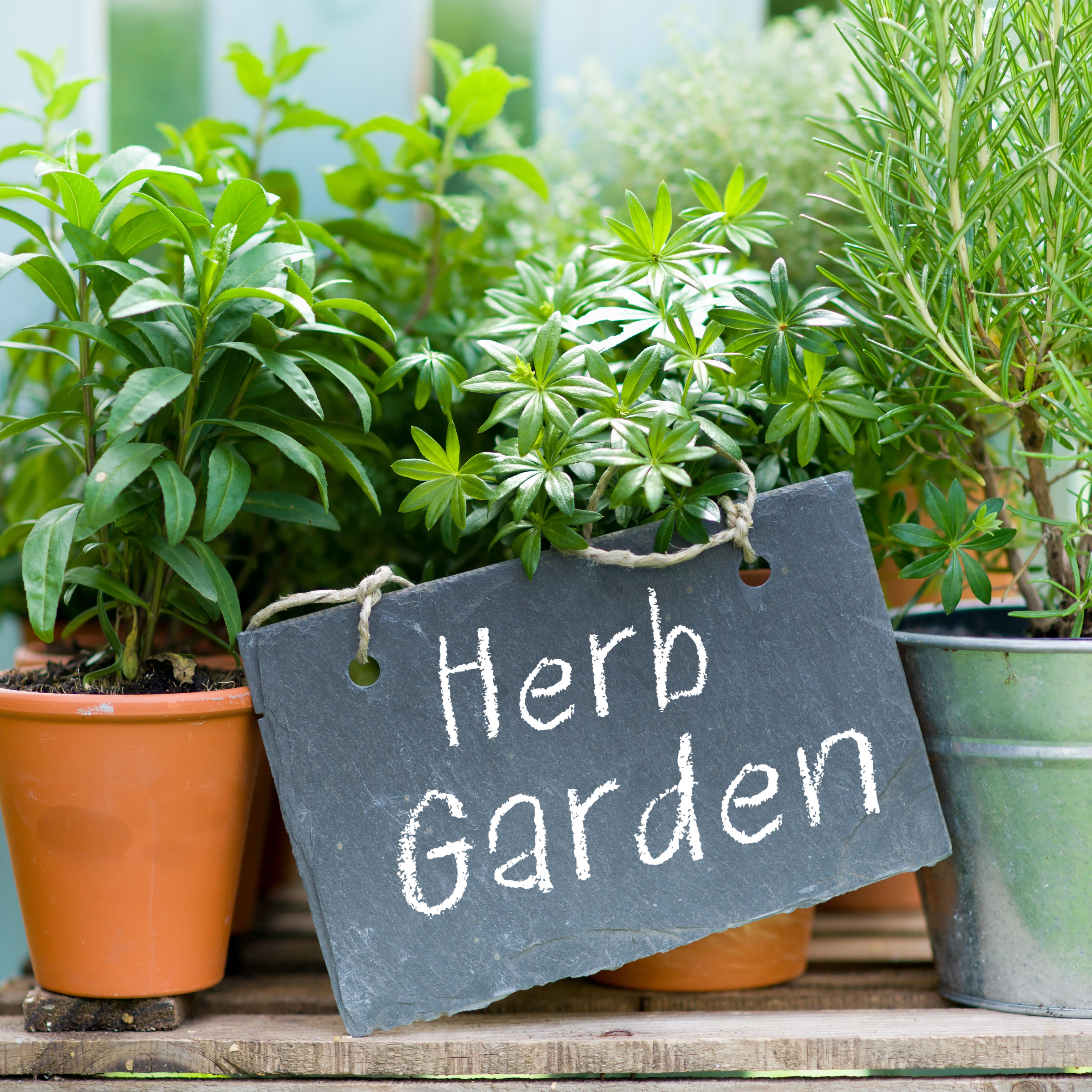 Herb garden xnbze5