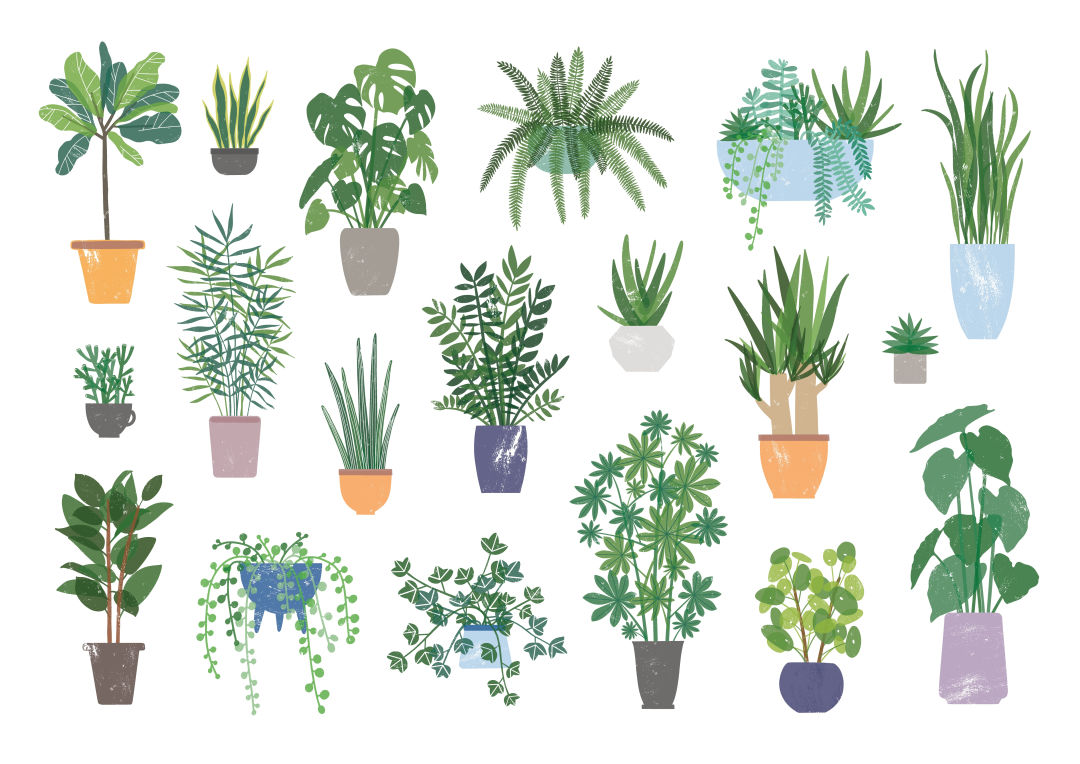 Which Houseplant Is Right for You? | Houstonia on dwarf umbrella tree care, landscaping care, pets care, geraniums care, plant care, african violets care, flower care,