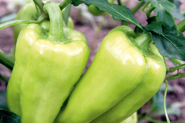 0709 pg157 savor gypsy peppers u4b6nq