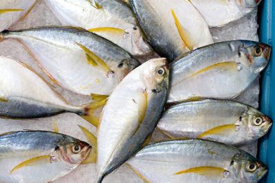 1209 71 fish ly3tnv