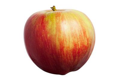 1013 washington apple pkfzua