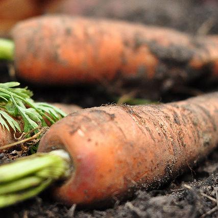 Carrots szloos