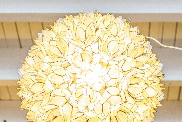 0213 habitat lotus flower yhyxl8