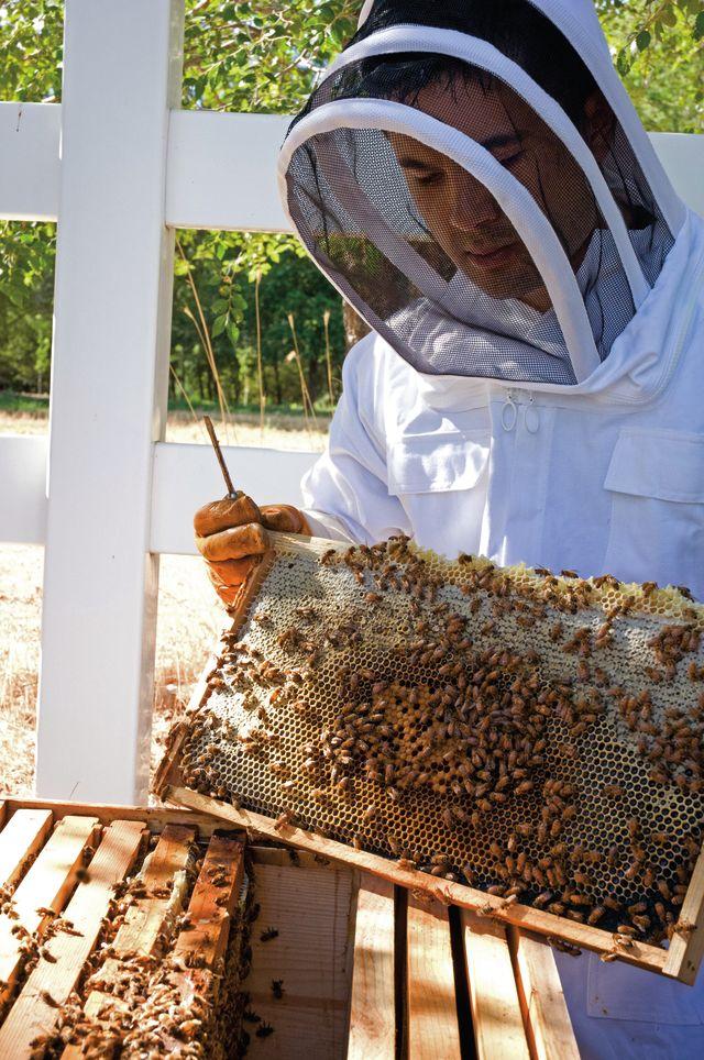 Park city summer 2013 word about town beekeeper fxvq0z