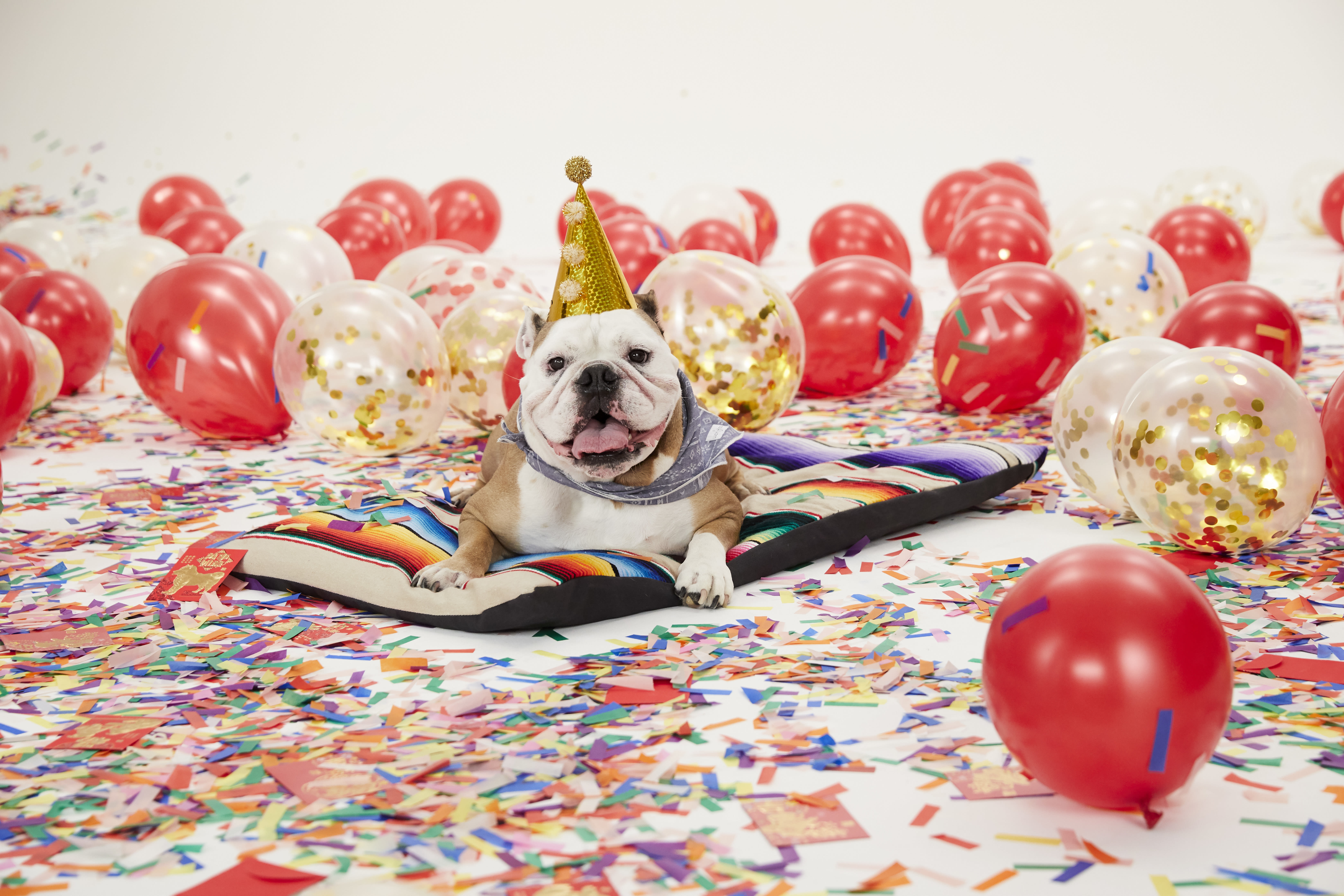Pop in nordstrom celebrates year of the dog  16  bcit4g