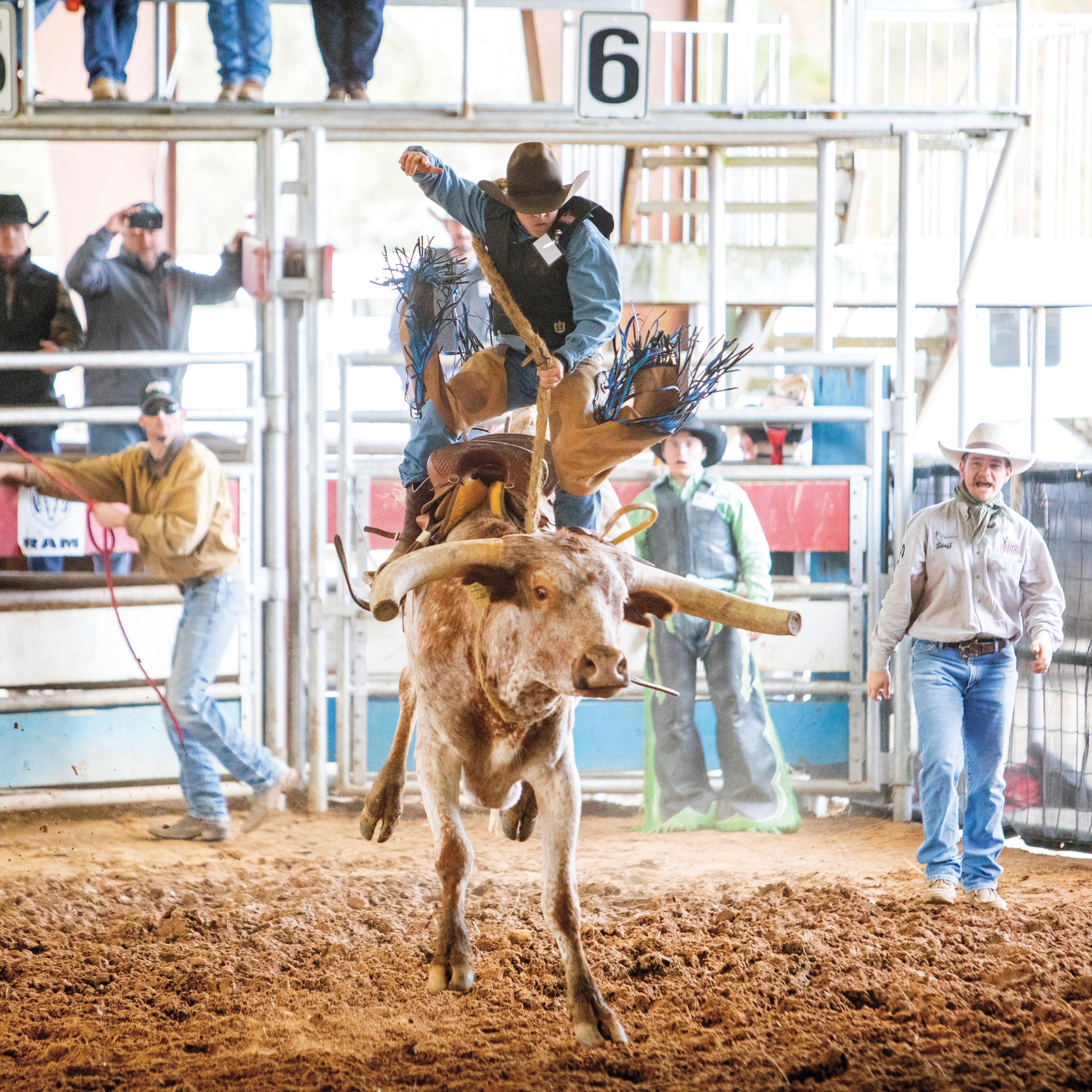 Houston Livestock Show And Rodeo Houstonia