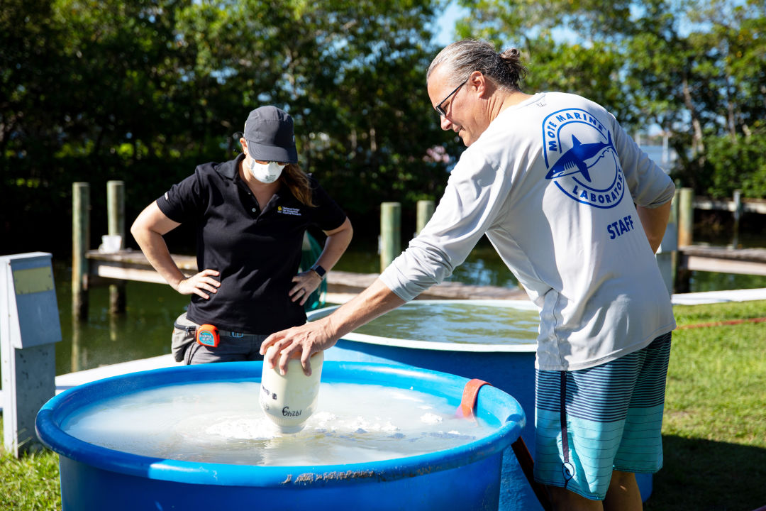 Mote staffers create a slurry of seawater and clay particles in the hopes that the resulting slurry will kill and bury red tide cells.