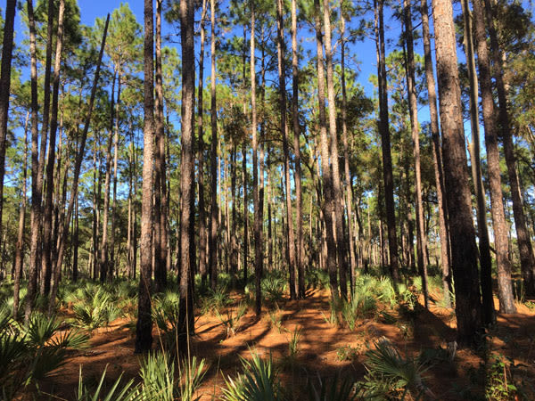 Ocalaforest600x prdauc