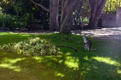 Seattle woodland park zoo 024 mb39jn