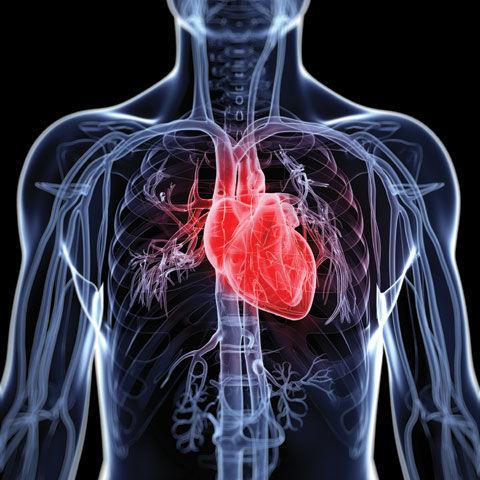Heart fa02vw