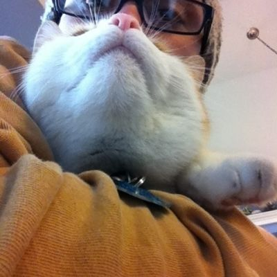5 13 cat beards2 kxgs9c