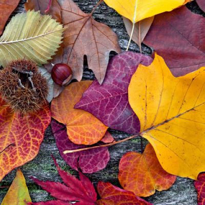 10 14 foliage aw7sz7