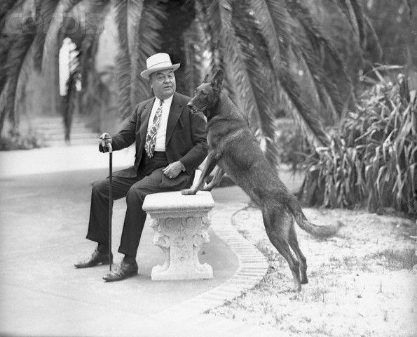 Jr  dog on seat qarp0v