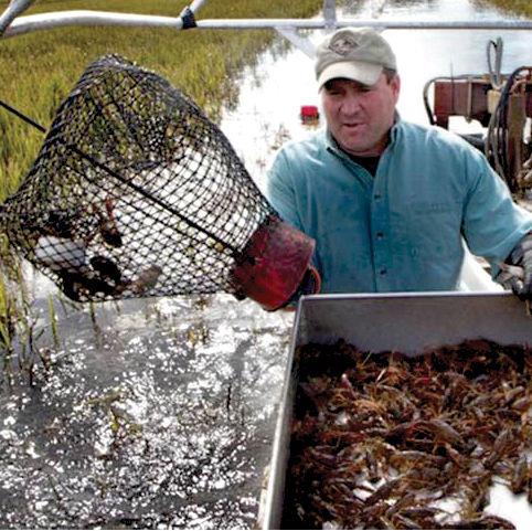 0317 crawfish feature farming hjqkjm
