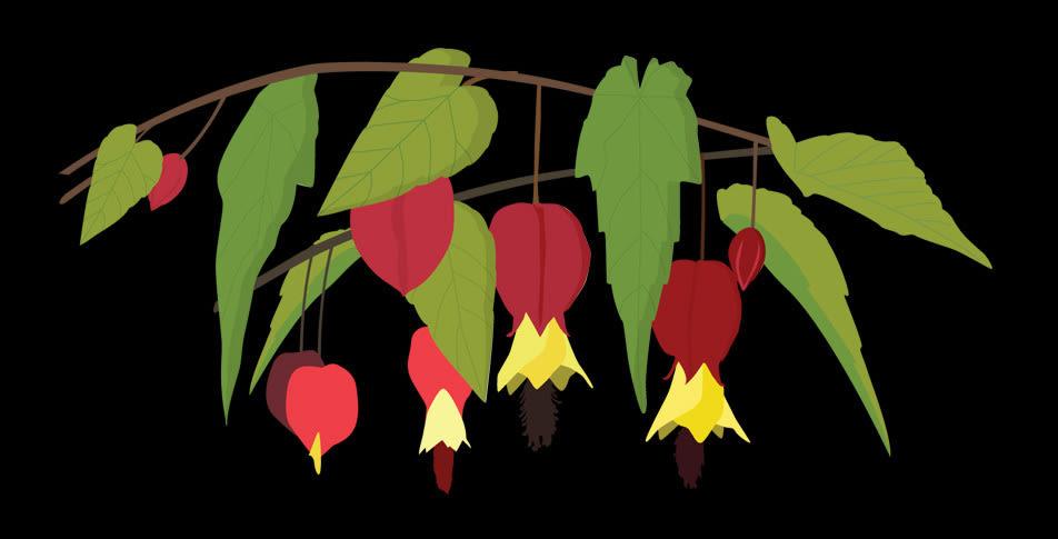 0810 32 dig plant pxotu9