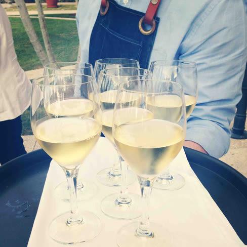 Chardonnay dka05j