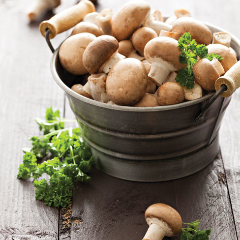 Health mushrooms flmxep