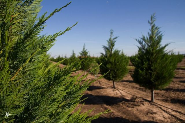 4 Christmas Tree Farms To Visit This Holiday Season ...