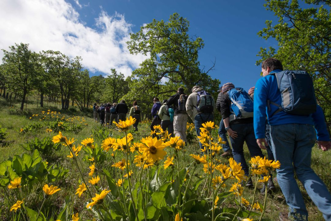 Balsamroot and tour participants 2016 brian chambers photography wtphmx