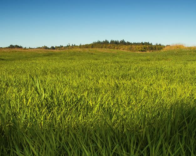 Hillsboro jackson bottom wetlands preserve lhgffg
