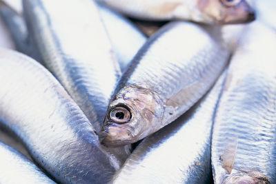 0706 pg151 savor fishy j8ynph