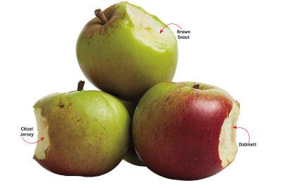 1013 cider apples taste nasty yfhzf0