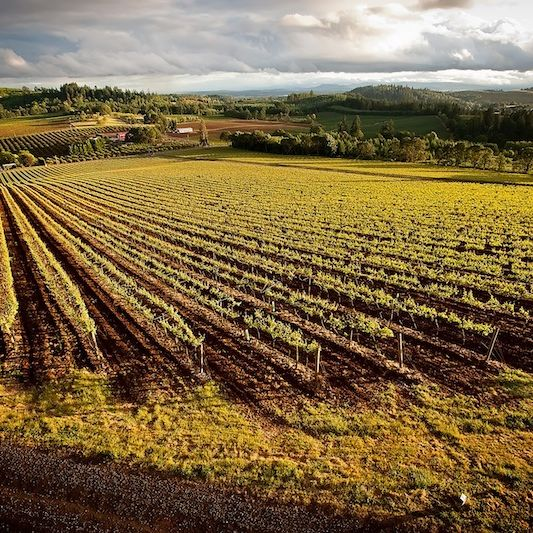 Wvv estate vineyard bernau 20 block vznjsr