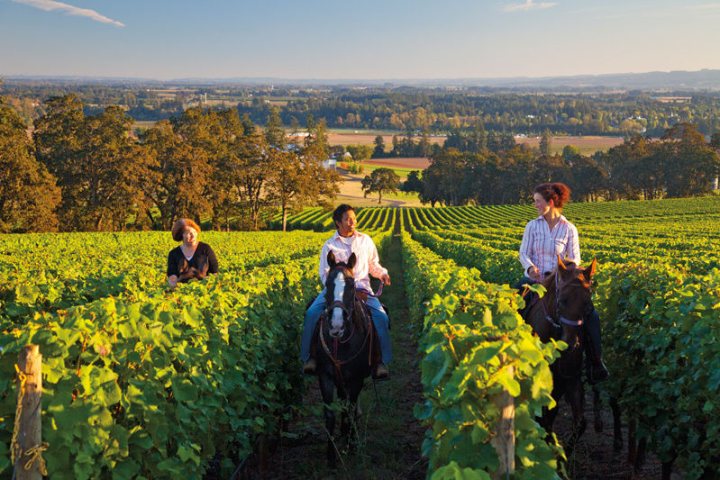Equestrian Wine Tours Portland