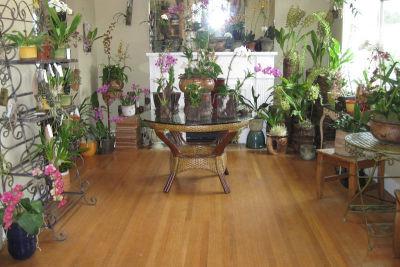Emeraldcityorchids thghqg