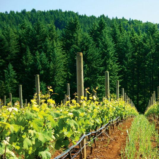 038 wine argyle winery t1ss9n