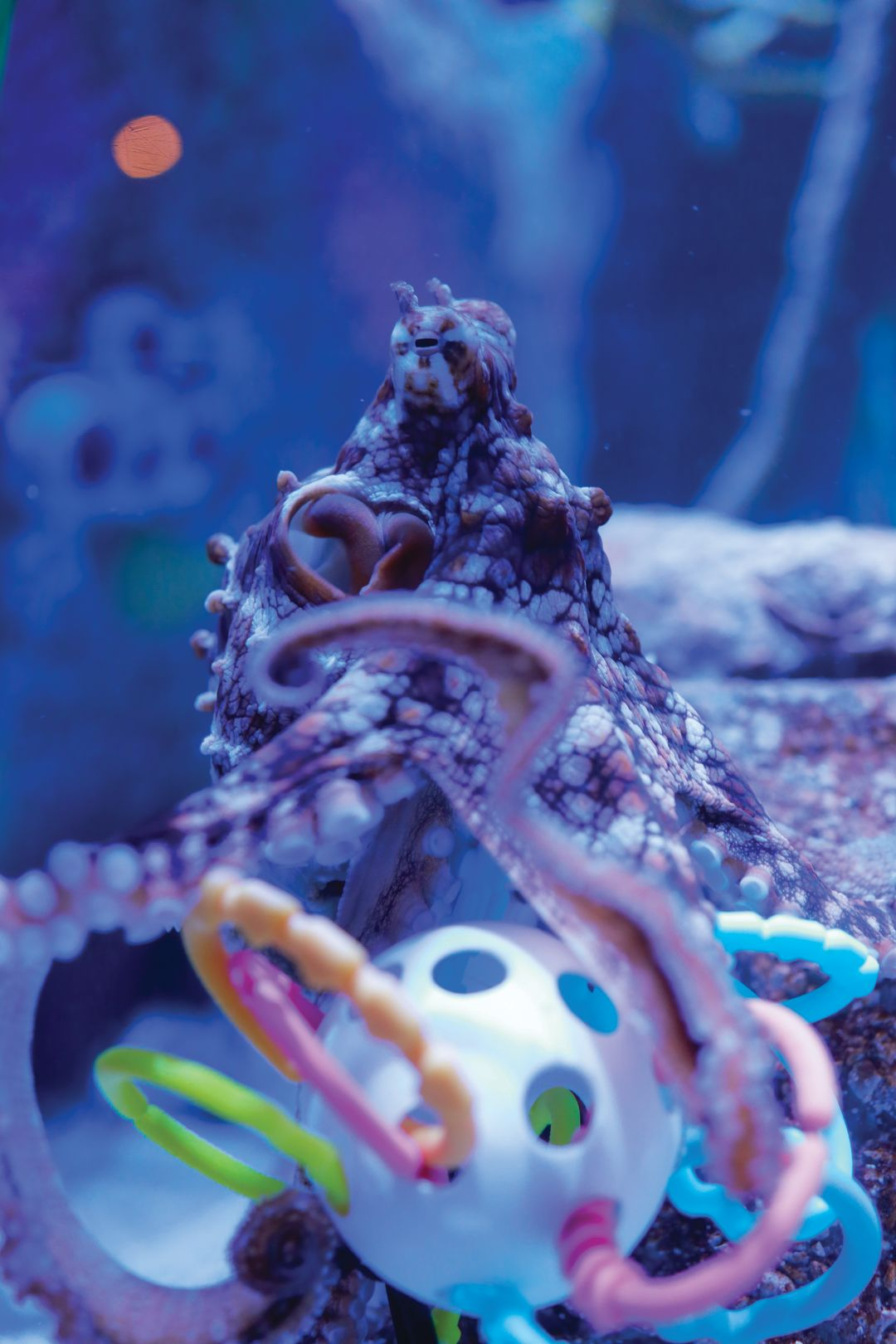 Playtime for Mote's octopus.
