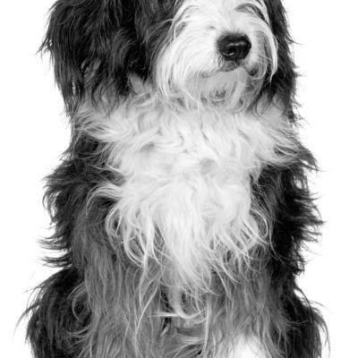Dog po4gby