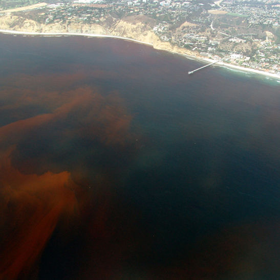 Red tide nmoyp3