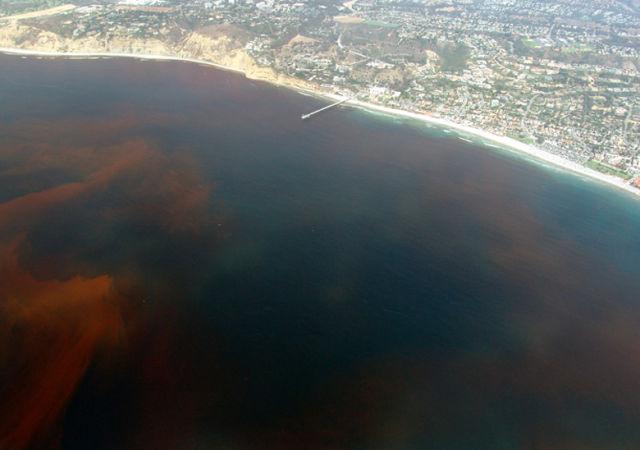 Red tide nmoyp3