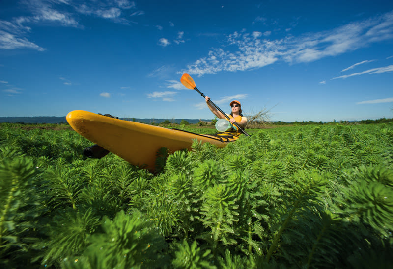 Smith bybee wetlands oupn4f