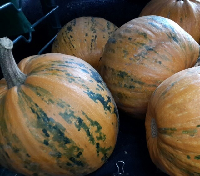 The Definitive Guide to Buying and Cooking Winter Squash ...