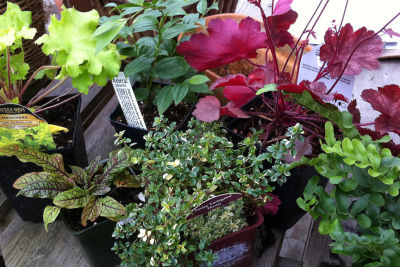 Winter window box plants en8rqe