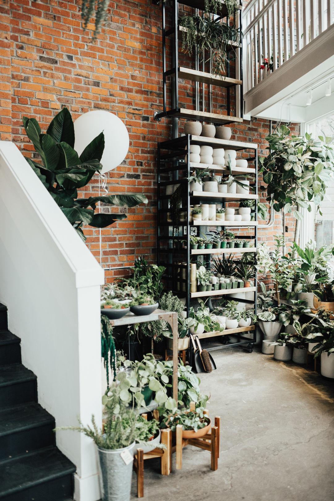 9 Seattle Plant Shops to Create an Indoor Jungle | Seattle Met on indoor bonsai plants, container flower garden design, indoor plants for bathrooms, plant rooms design, indoor plants and landscaping,
