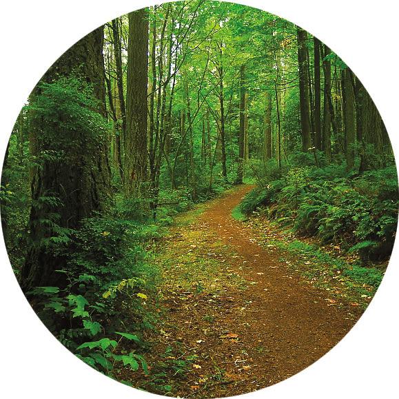 Pomo 0617 forest park trails firelane 15 eyjz1w